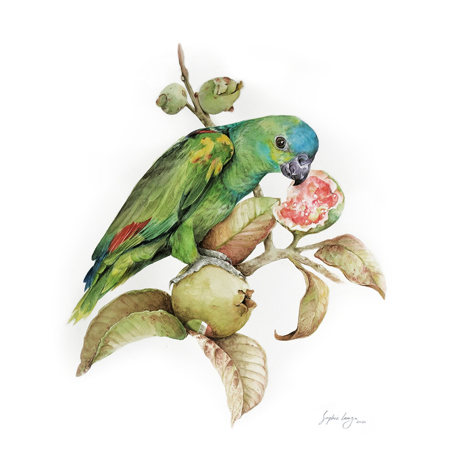 Time into layers: Guianan toucanet, 2020