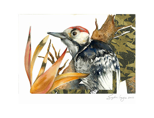 Red-fronted woodpecker, 2017