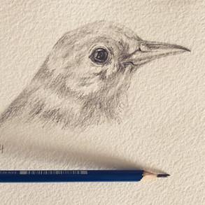 Pencil on cotton paper