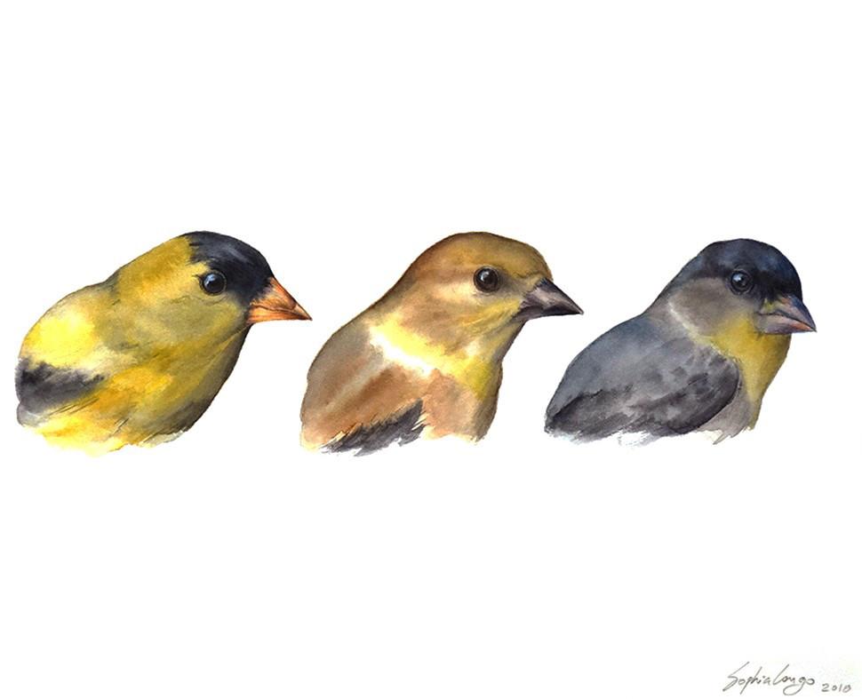 Goldfinch triad, 2018
