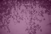 leaf1b.jpg