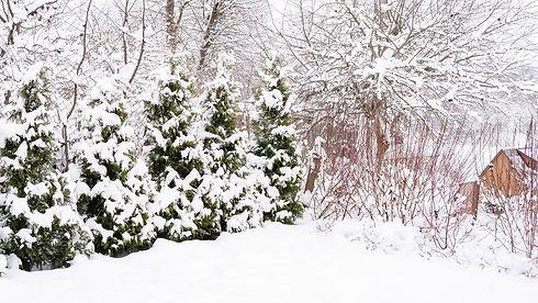 winter main.jpg