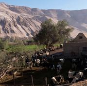 Valle de Camarones