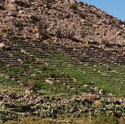Tulapalca Terrazas de cultivo