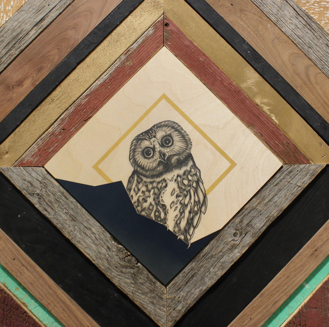 1 Less Timber Harvest, 1 More Saw-Whet Owl