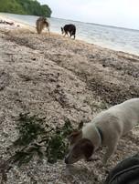 Het strand ontdekken