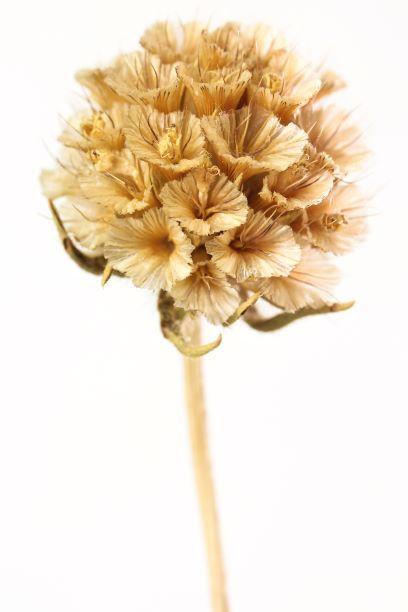 04 Flower seed head A6 resize.jpg