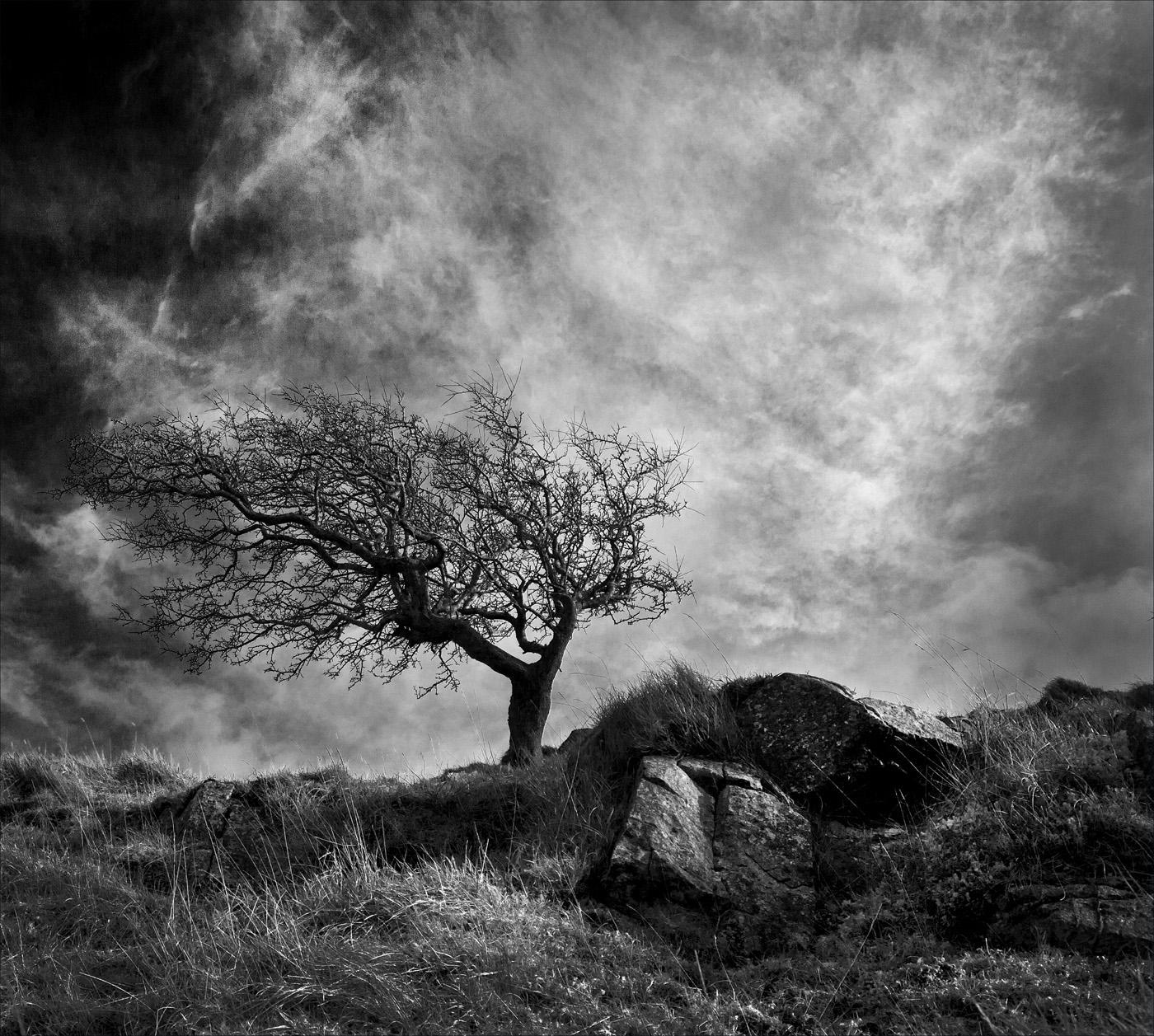 Isolation_Chris Carsley