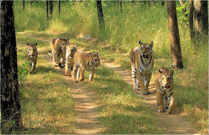 Tiger's.jpg