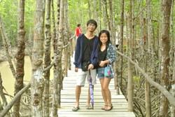 Walking Under the Mangroves