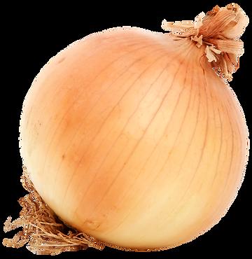 purepng.com-brown-onionvegetablesonion-b