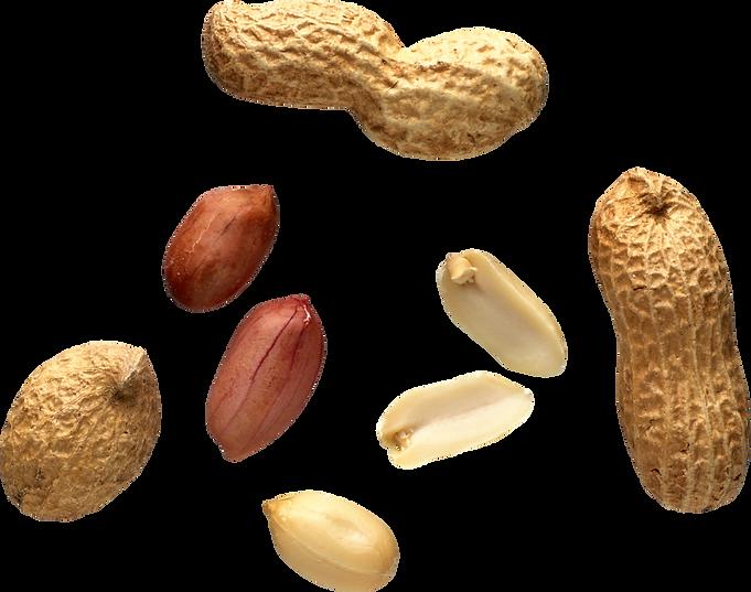 peanut_PNG13.png