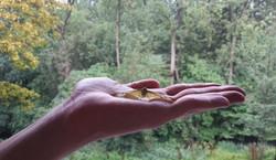 vlinder op hand