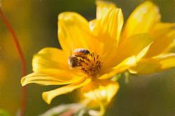 Bee Not Wasteful