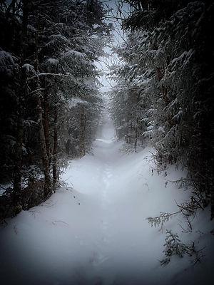 wintertrail.jpg