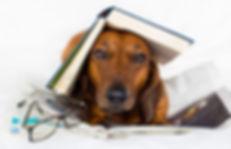 dog-books.jpg