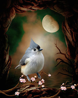 bird-titmouse-in-the-moonlight-john-june
