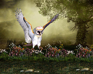 barn-owl-in-fight-john-junek