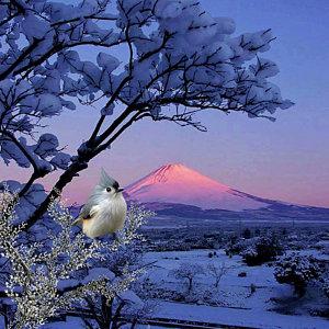 a-bird-in-winter-scene-john-junek