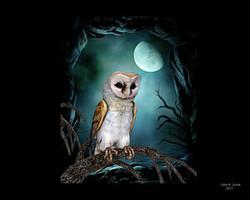 1-barn-owl-john-junek