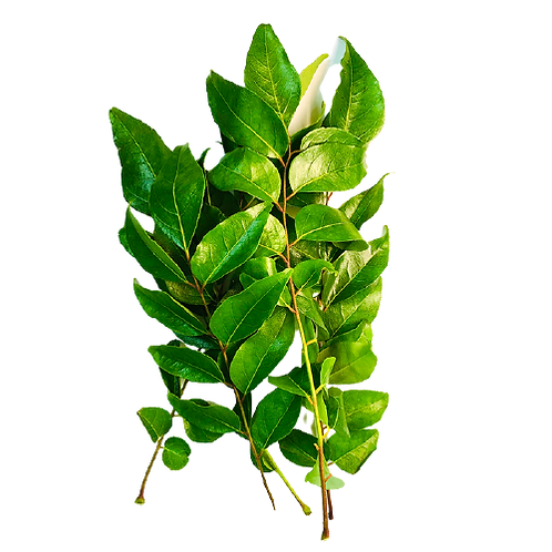 Curry Leaves/கறிவேப்பிலை