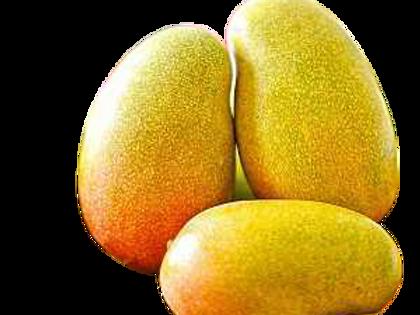 Imam Basanth Mango/இமாம் பசாந்த்  மாம்பழம்