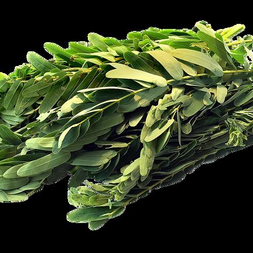 அகத்தி  கீரை/Hummingbird Tree Leaves