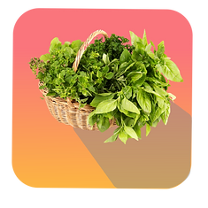 Spinach Icons-01.png