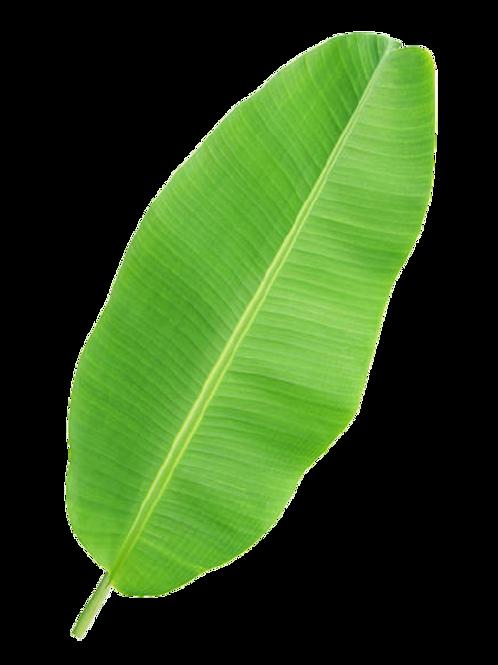Banana Leaves/ வாழை இலை