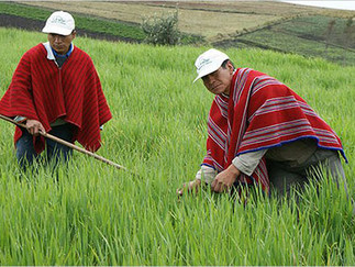 Ley de Tierras: hacia la industrialización del agro