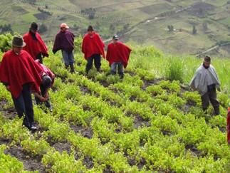El agro podrá beneficiarse de capital extranjero