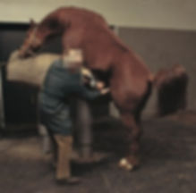 dummy+stallion.jpg