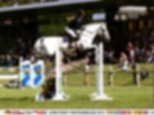 stallion1.jpg