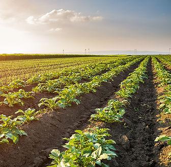 agriculture-main.jpg