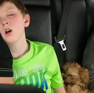 Teddy taking a nap on his way home