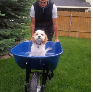 """""""Finn's favorite way to get around the yard"""""""