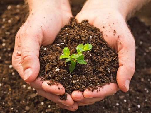 The Significance of Soil