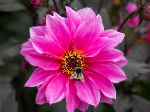 Support Pollinators
