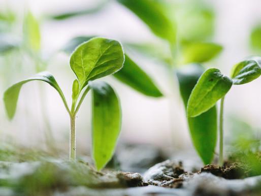 Mountain Gardening:                    What to Do in June