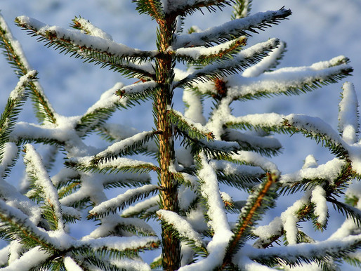 Winter Watering Tips for Trees
