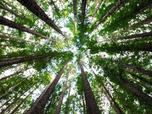 Celebrate National Arbor Day