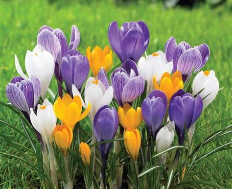 Prepare Your Bulb Garden