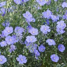 Benefits of Perennials