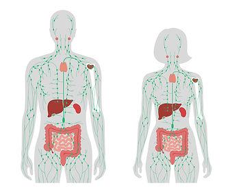 リンパ人体.jpg
