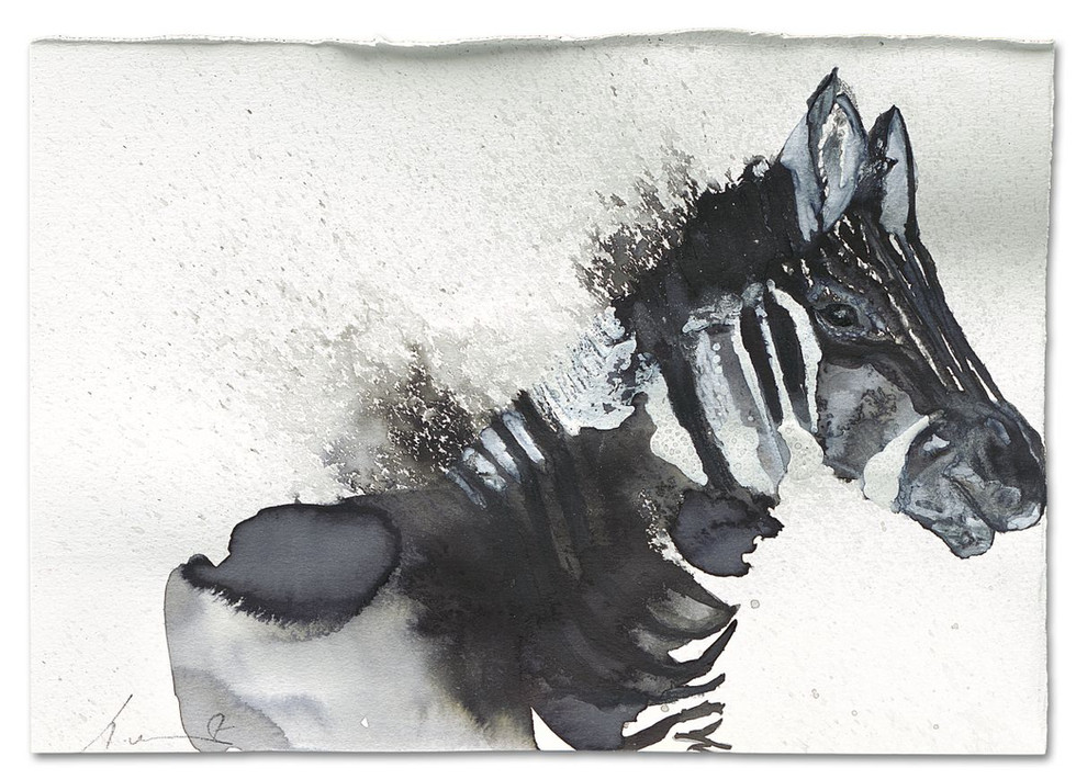 Zebra-Disappearing, ink on paper, 2014
