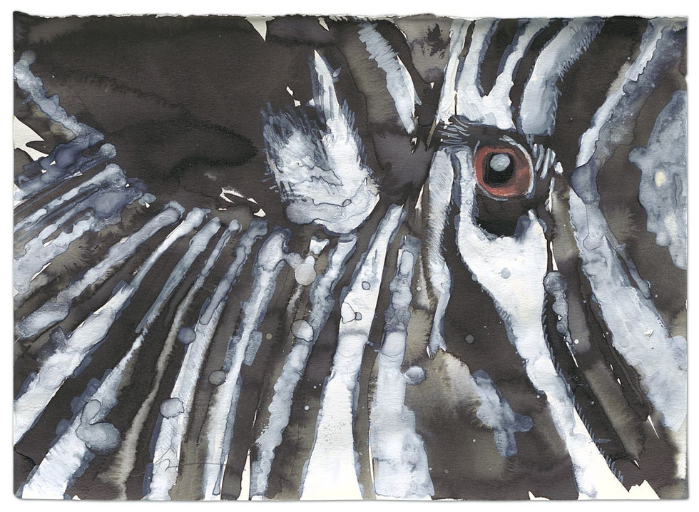 Zebra-Eye, ink, acrylic and colour pencils on paper, 2014