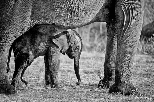 What Can You Do to Save Africa's Wildlife?