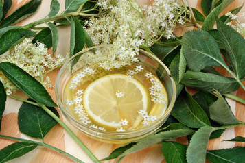 Herbal Infusions to Heal Coughs & Fight Fatigue