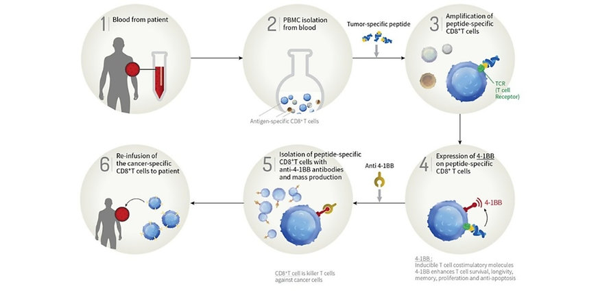 T_Cell_Therapy_1_edited_edited_edited_ed