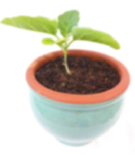 coconut coir in pot with plant